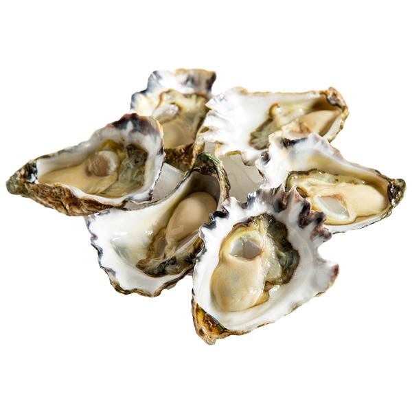 Oysters Sydney Rock Live / Dozen
